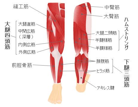 Anatomical legs